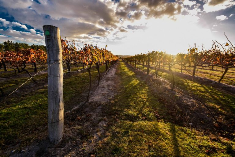 stanthorpe, grantie belt, award winning wines, granite belt region, nsw wines, helicopter, helicopter wine tour, gift