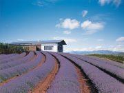 kooroomba vineyard, winery tour, brisbane helicopter tours, scenic rim, helicopters, helicopter charter, luxury